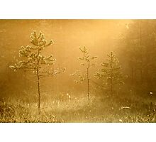 3.8.2013: Those Trees, That Light Photographic Print