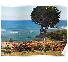 Beach garden: Honolulu, Hawai'i Poster