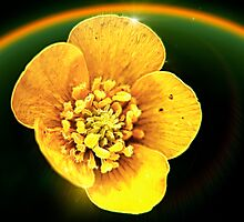 Starship Buttercup Photographic Print