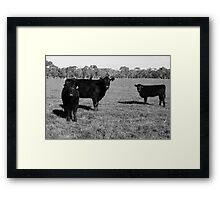 Cows 1 Framed Print