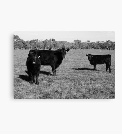 Cows 1 Canvas Print