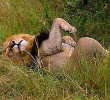 Very relaxed lion by Valerija S.  Vlasov