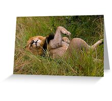 Very relaxed lion Greeting Card