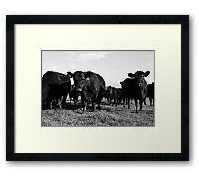 Cows 2 Framed Print