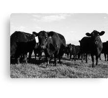Cows 2 Canvas Print