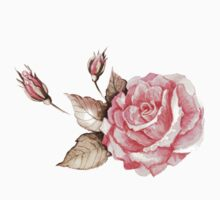 Watercolor rose by Anna  Yudina