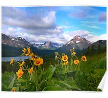 Wildflowers Glacier National Park Poster
