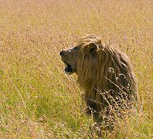 Slobber lion by Valerija S.  Vlasov