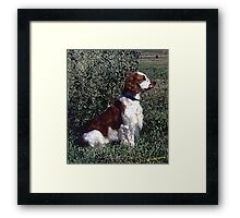 Irish Red & White Setter Dog Framed Print