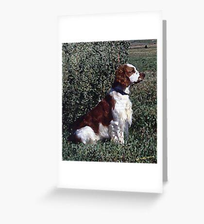Irish Red & White Setter Dog Greeting Card