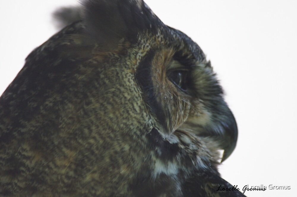 Great Horned Owl by Lorelle Gromus