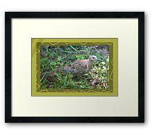 Dove in sun's spotlight Framed Print