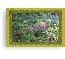 Dove in sun's spotlight Canvas Print