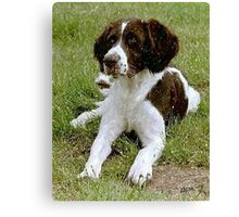 Drentse Partridge Dog Portrait  Canvas Print