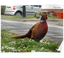Ironbridge Pheasant Poster
