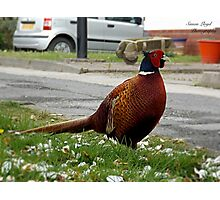 Ironbridge Pheasant Photographic Print
