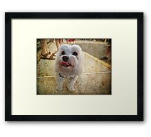 Precious Pup Framed Print