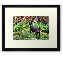 There's Something In The Air Framed Print