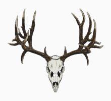 Mule deer skull by saltypro
