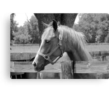 Sweet Equine Face b/w Canvas Print