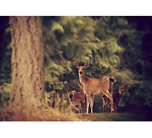 Learning foragers  Photographic Print