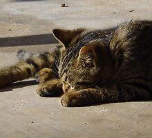Sleepy Time by WildestArt