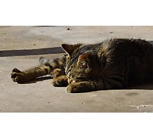 Sleepy Time Photographic Print