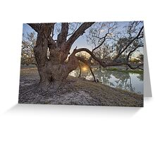Bush Sunset Greeting Card