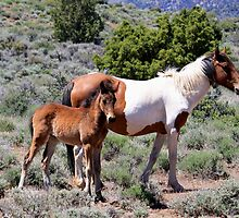 Mama and baby Virginia City Highlands,Virginia City Nevada USA by Anthony & Nancy  Leake