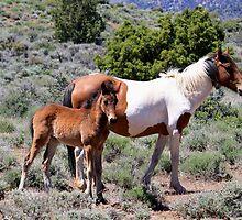 Mama and baby Virginia City Highlands,Virginia City Nevada USA by Anthony & Nancy  Leake