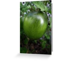 Green Tomato on the Vine Greeting Card