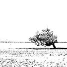 lone tree by stickelsimages