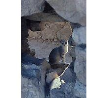 cat in ruins Photographic Print