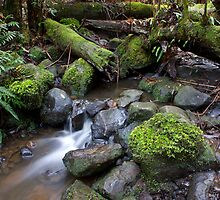 Ferny Creek by Greg McMahon
