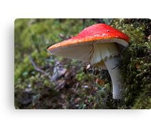 Scarlet Flycap Complete with Fly Canvas Print