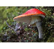 Scarlet Flycap Complete with Fly Photographic Print