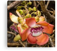 Cannonball Tree Tropical Flower Canvas Print