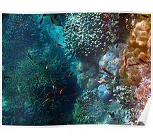 Coral Sea Poster