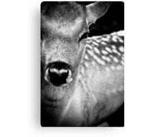 Oh Dear, Oh Deer. Canvas Print
