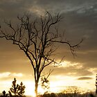 tree at sunset by jane walsh
