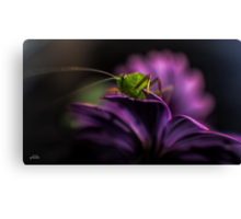 Purple Surprise Canvas Print
