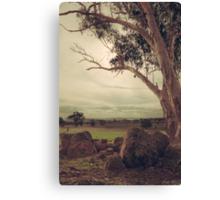 Eldorado Gumtree Canvas Print