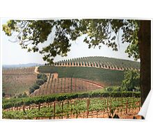 A Stellenbosch Wine Estate Poster