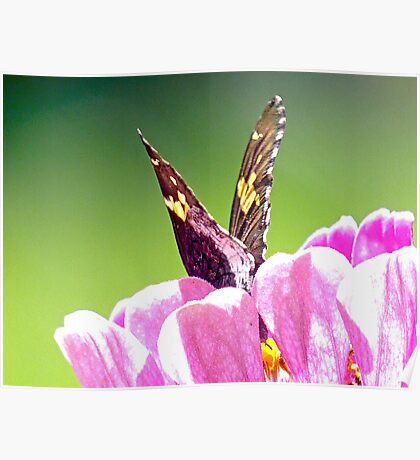 Butterflies are self propelled Flowers Poster