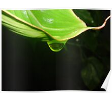 Waterdrop at Plant Poster