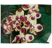 Wonderful Orchid Flower Poster