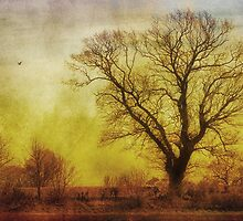 Tree by JulieCoe