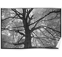 Noble Avenue Tree Poster