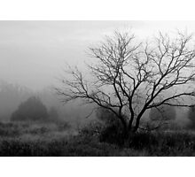 Spooky Hollow Photographic Print