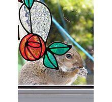 Rennie Mackintosh Squirrel Photographic Print